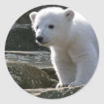 Baby Polar Bear STicker