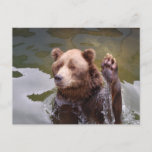 Bathing Brown Bear  Postcard