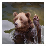 Bathing Brown Bear Poster