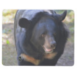 Black Spectacled Bear Journal