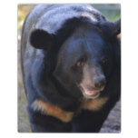 Black Spectacled Bear Plaque