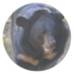 Black Spectacled Bear Plate