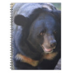 Black Spectacled Bear Spiral Notebook
