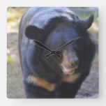 Black Spectacled Bear Square Wall Clock