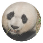 Cute Giant Panda Bear Dinner Plate