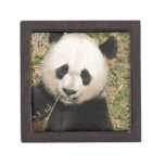 Cute Giant Panda Bear Jewelry Box