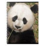 Cute Giant Panda Bear Notebook