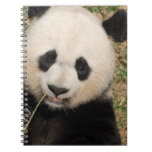 Cute Giant Panda Bear Spiral Notebook