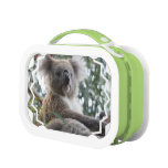 Koala Bear Lunch Box