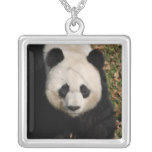 panda-92 silver plated necklace