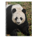 Petulant Panda Bear Notebook