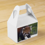 Prowling Red Panda Favor Box