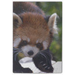 Prowling Red Panda Post-it Notes