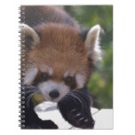 Prowling Red Panda Spiral Notebook