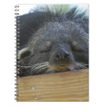 Sleeping Binturong Notebook