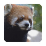 Sweet Red Panda Bear Drink Coaster