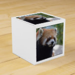 Sweet Red Panda Bear Favor Box