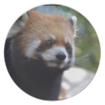 Sweet Red Panda Bear Plate
