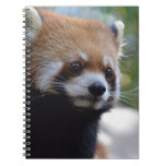 Sweet Red Panda Bear Spiral Notebook