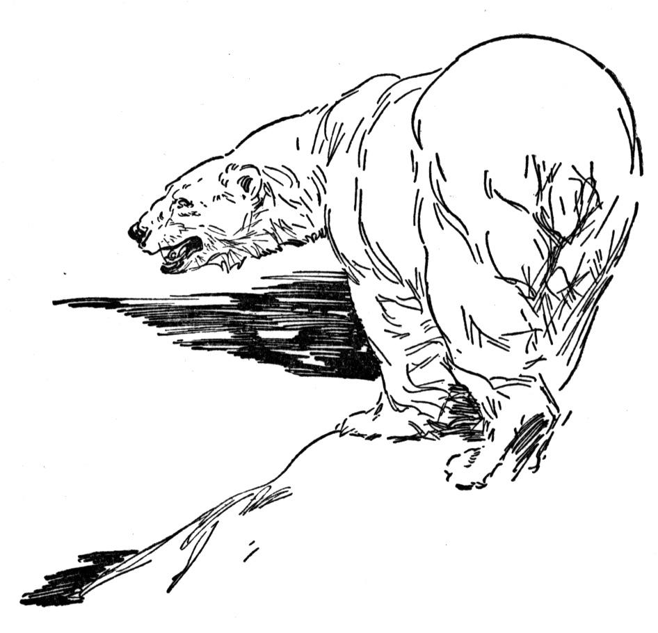 Free Coloring Pages Of Sun Bears