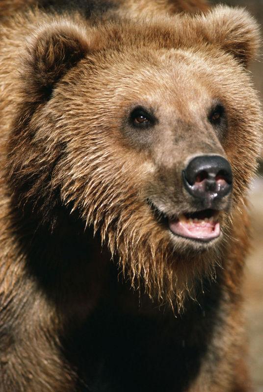 Amazoncom bear claw necklace